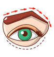 eyelid elevation icon cartoon style vector image vector image
