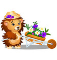 fluffy hedgehog in the garden carries a vector image vector image