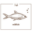 milkfish sketch fish icon of chanos vector image vector image