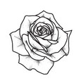 rose tattoo art vintage vector image