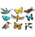 collection colorful butterfly insects and birds vector image