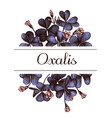 hand drawn design with oxalis highly detailed vector image vector image