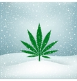 Hemp grows snow vector image vector image