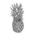 pineapple sketch engraving vector image vector image