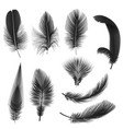 black realistic feathers isolated on white vector image vector image