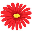 red flower on white background vector image vector image