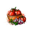 tomatoes and garlic from a splash watercolor vector image