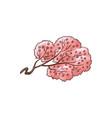 blooming sakura branch flat vector image