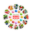 berries and fruits rich of vitamins and minerals vector image vector image