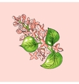 Blossoming branch of apple tree on pink background vector image