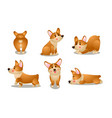 Brown corgi dog animals doing everyday things