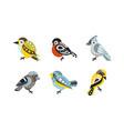 collection colorful birds bullfinch sparrow vector image