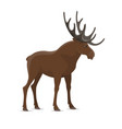 elk moose wild animal isolated icon vector image vector image