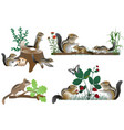 family of chipmunks outdoors in colour image vector image vector image