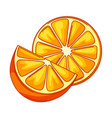oranges whole and slices vector image