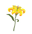 realistic vivid yellow lily on white vector image vector image