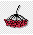Rowan sketch on transparent background for your vector image