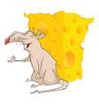 cute rat and cheese cartoon vector image