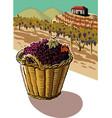 basket full of freshly harvested grapes vector image vector image
