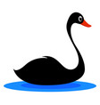 black swan on white background vector image vector image