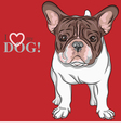 dog French Bulldog breed vector image