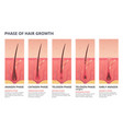 medical infographic of hair growth vector image vector image