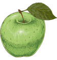 ripe green apple vector image vector image