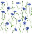 cornflower pattern vector image vector image