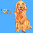 dog breed Golden Retriever sitting on the blue bac vector image vector image