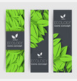 flat eco leaf vertical banners concept vector image vector image