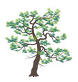 old japanese pine with dark trunk vector image