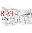 rats word cloud concept vector image