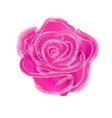 watercolor painting pink roses on a white vector image