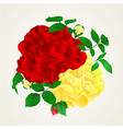 red and yellow rose with buds and leaves vintage vector image