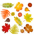 autumn leaves set isolated vector image vector image