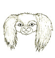 black white dog head of a pekingese isolated on vector image