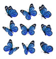 colored butterflies flying beautiful insects vector image vector image
