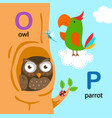 isolated alphabet letter o-owl p-parrot vector image vector image