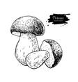Porcini mushroom hand drawn vector image vector image