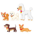 set collection of different kind of dogs vector image vector image