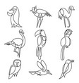 birds continuous line drawing elements set vector image