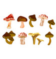 different kinds of mushrooms vector image vector image