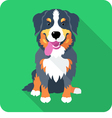 Dog Bernese Mountain Dog sitting icon flat design vector image vector image