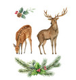 watercolor card with a deer and a fir vector image vector image