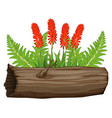 aloe vera flowers and wooden log on white vector image vector image