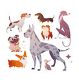 cartoon dogs of different breeds and sizes vector image vector image