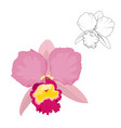 image orchid flower on white background vector image vector image