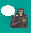 monkey with grenade pop art vector image vector image