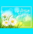 spring daisies chamomiles dandelions juicy green vector image vector image