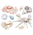 crabs and seashells hand drawn set vector image vector image